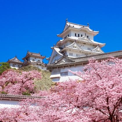 Il castello diCastello di Himeji con fiori di ciliegio in Giappone